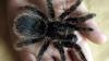 В Нью-Йорке открыта выставка живых пауков