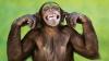 В Ганновере эвакуировали посетителей зоопарка из-за сбежавших шимпанзе