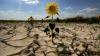 Фракция ПКРМ считает, что есть предпосылки для введения режима ЧС из-за засухи