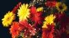 Какие цветы лучше дарить учителям 1 сентября
