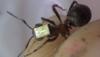В Англии на муравьях установят небольшие датчики