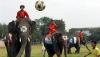 В Таиланде слонов обучают футболу (ВИДЕО)
