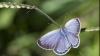 """Японские бабочки мутируют из-за аварии на """"Фукусиме"""""""