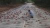 Cухопутные крабы доставляют хлопот жителям Флориды