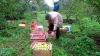 Фермеры жалуются: из-за нехватки  рабочей силы страдает уборка урожая