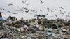 Жители Чимишлии жалуются на невыносимый запах и крыс, бегущих со свалки