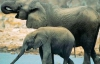 В Индии слонов, живущих при храмах, посадят на диету
