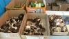 Врачи не советуют покупать грибы на рынках и обочинах дорог