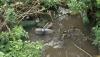 Резинские экологи встревожены уровнем загрязнения воды на Днестре