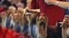 Международная выставка собак стартовала в Кишиневе