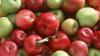 Несколько фур с молдавскими фруктами задержаны на Брянской таможне