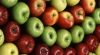 Молдавские фрукты и овощи на экспорт теперь украшает этикетка с логотипом «Молдова»