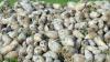 Два производителя сахара в стране претендуют на сырье с одного поля