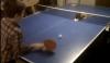 Кот составил компанию в игре в теннис (ВИДЕО)