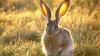 В первый день начала сезона кишиневские охотники подстрелили четырех зайцев