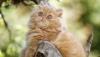 Кражу курицы котом-рецидивистом расследуют полицейские в Британии