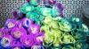 Китайцы создали розы с эффектом хамелеона