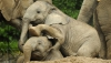 У слонов московского зоопарка появился личный тренер