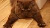 В США коты признаны опасными хищниками