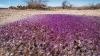 В аризонской пустыне обнаружены загадочные фиолетовые сферы (ФОТО)