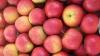В 2012 году объем экспорта яблок в Россию был на 30% меньше