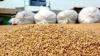 Производители хлеба получат из резервов 27,9 тысяч тонн пшеницы