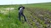 Статистика: Все меньше молдаван занимаются сельским хозяйством