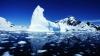 Американские ученые: Арктику покроют зеленые леса