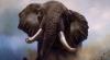 В Южной Африке пьяный турист испугал слона