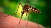 Тирасполь страдает от нашествия комаров