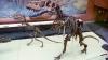Польский палеонтолог нашел останки одного из древнейших воробьев