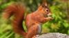 В столичном парке белка отважилась принимать пищу из рук прохожих (ВИДЕО)