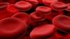 Японцы клонировали мышь из одной капли крови