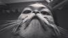 Борода из кота - новое фоторазвлечение (ВИДЕО)