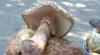 Лесные грибы, продаваемые на обочинах дорог, опасны для здоровья
