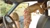 В Нидерландах полиция задержала 7-летнего угонщика