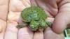 В зоопарке Сан-Антонио посетителям показали двухголовую черепаху