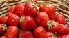 Отечественные фермеры собрались в столице на клубнично-медовый фестиваль