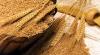 Правительство предоставит пекарням четыре тысячи тонн пшеницы из госрезервов