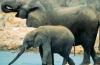 Раз в год слонов в Индии отправляют в так называемые летние лагеря