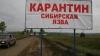 Сибирской язвой после убоя коровы заразились в Сорокском районе трое