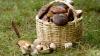 С начала лета грибами отравились свыше 50 человек