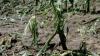 От града и проливных дождей пострадало 38 тысяч гектаров посевов