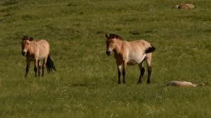 Правительство США легализовало убой лошадей на мясо