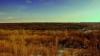 Экологи: после Чернобыльской катастрофы стали медленнее расти леса