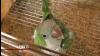 Попугай помог предотвратить ограбление во Флориде