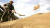 Бумаков: Урожай зерновых - лучший за последние 10 лет