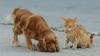 В Новой Зеландии кота спасли от отравления, перелив ему собачью кровь