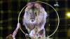 Сальвадор ввел запрет на выступление животных в цирке