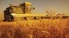 Богатый урожай зерновых не радует фермеров, которые жалуются на низкие цены